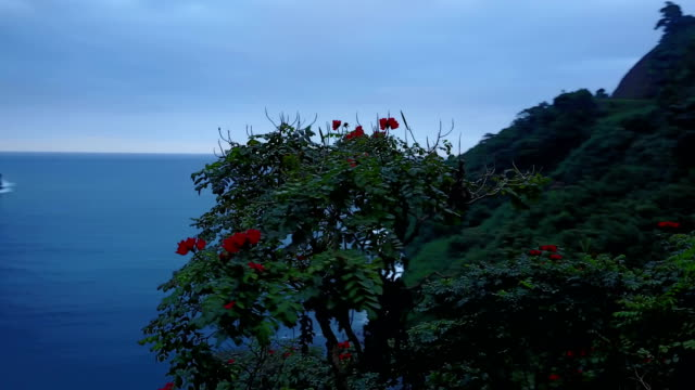 Encerclant autour des fleurs rouge vif à la cime des arbres sur l'île de Maui
