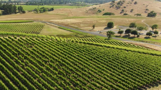 Circling Drone Shot of Northern California Vineyard