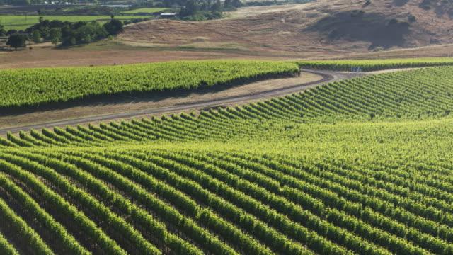 Circling Drone Shot of Sonoma, California Vineyard