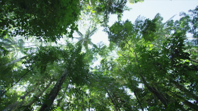 circling shot of tropical canopy. - inquadratura dal basso video stock e b–roll