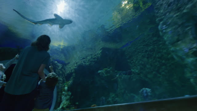 Circling view of mother and children walking in aquarium tunnel with fish swimming overhead / Draper, Utah, United States