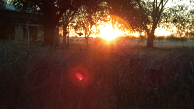 a circular lens flare bouncing off of trees - barn stock videos & royalty-free footage