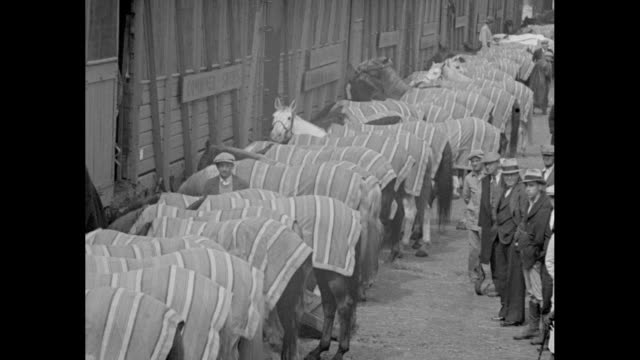 vídeos de stock e filmes b-roll de circus horses of ringling bros. and barnum & bailey circus being led off train and lined up on station platform next to train / closer shot of horse... - circo