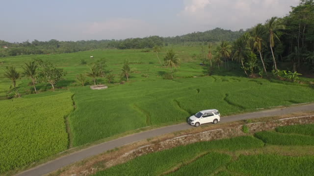 cirebon java. - rice paddy stock videos & royalty-free footage
