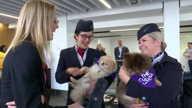 city airport offer 'airport therapy' pets to cuddle and relief stress; city airport, london, uk; various shots of dogs being cuddled and stroked by... - crew stock videos & royalty-free footage