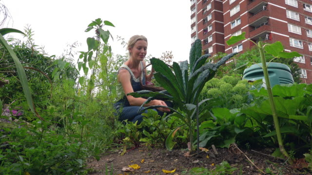 city allotment - vegetable garden stock videos & royalty-free footage