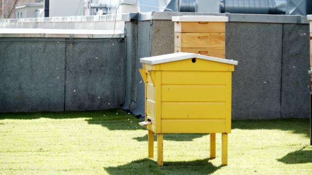 city beehive - beehive stock videos & royalty-free footage