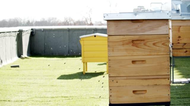vidéos et rushes de ruche de ville - ruche