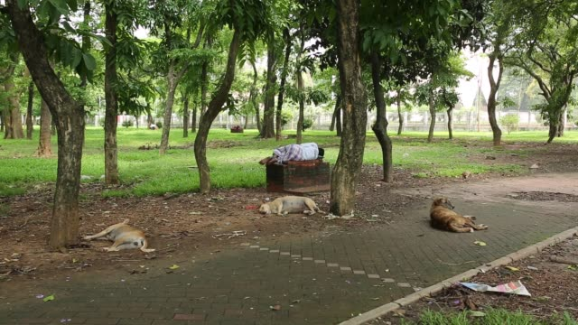 city corporation worker clean park in dhaka bangladesh on may 08 2018 - guter zustand stock-videos und b-roll-filmmaterial
