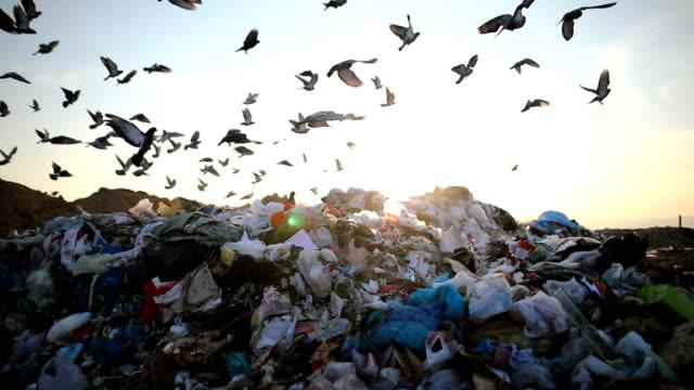 埋立地の都市ごみ、鳥と群がっ - ゴミ袋点の映像素材/bロール