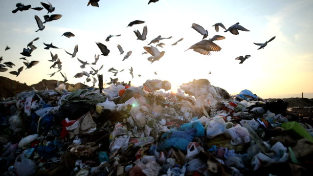 City Garbage in a landfill, swarmed with birds