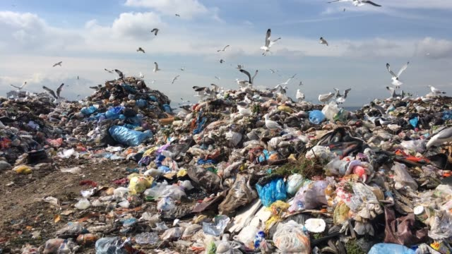 city garbage - sea water bird stock videos & royalty-free footage