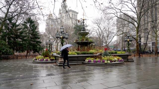 city hall park - new york - bare tree stock videos & royalty-free footage