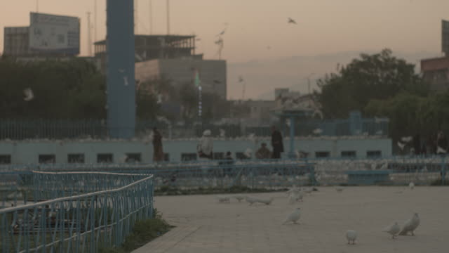 city of herat, afghanistan; a sea of birds in a park, in the evening hue - 2014 stock videos & royalty-free footage