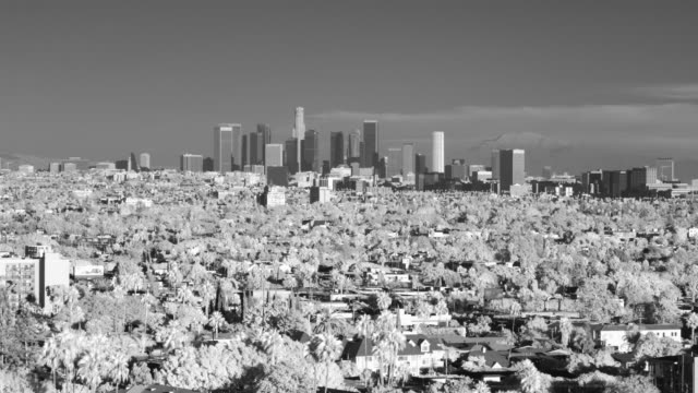 t/l, b&w, infrared, ws, cityscape, day to night, los angeles, california, usa  - fan palm tree stock videos & royalty-free footage