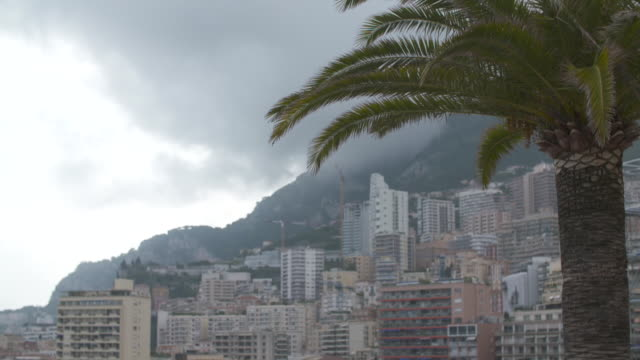 cityscape of monaco in low cloud and palm tree in foreground - ヤシ点の映像素材/bロール