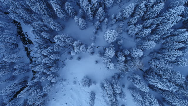 4k cityscapes, landscapes & establishers - aerial view flying above trees with snow 4k - draufsicht stock-videos und b-roll-filmmaterial