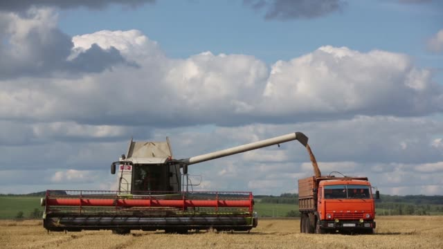 A Claas KGaA combine harvester drops grain into a waiting OAO Kamaz truck as it passes through a field of wheat during the summer harvest at the OAO...