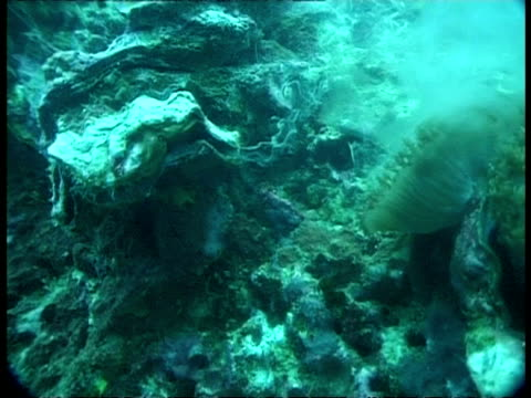 clam - underwater, ms spawning - spawning stock videos and b-roll footage