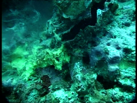clam - underwater, spawning - spawning stock videos and b-roll footage