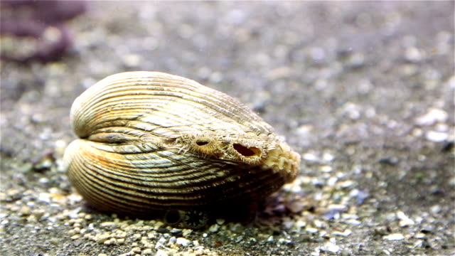 clam - crustacean stock videos and b-roll footage