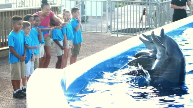 stockvideo's en b-roll-footage met klasse op excursie naar natuurpark, met dolfijn trainer - 6 7 years