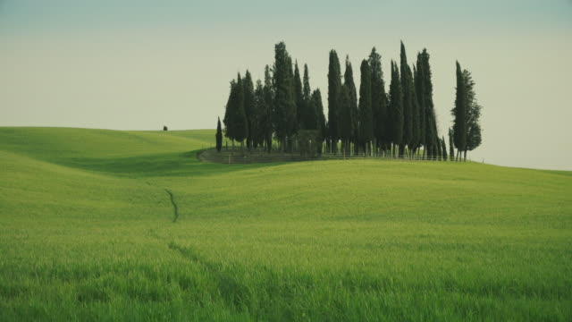 Klassieke Toscaanse weergave: groene heuvel en cipressen