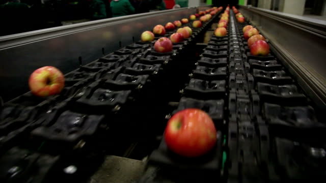 clean and fresh apples on conveyor belt - conveyor belt stock videos & royalty-free footage