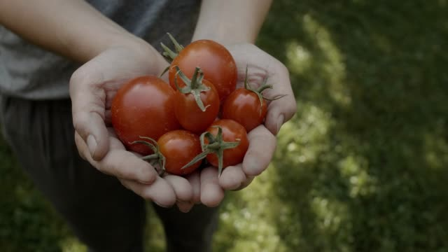 clean eating & healthy living - tomato stock videos & royalty-free footage