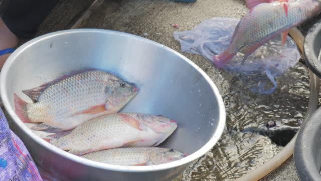 UHD/4 k Apple ProRes (HQ): saubere Fisch vor dem Kochen.