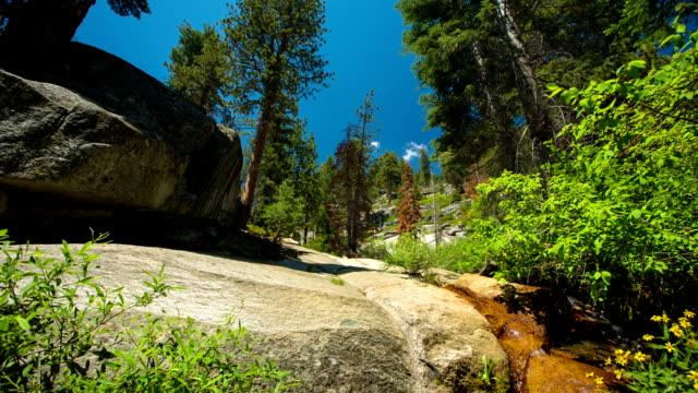 pulire la natura - parco nazionale di sequoia video stock e b–roll