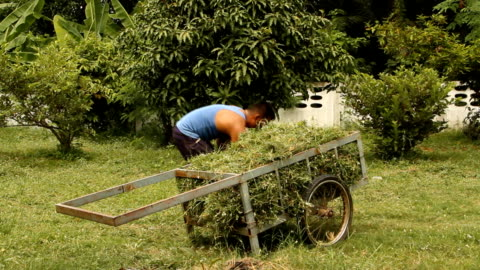 clean up the grasses . - pruning stock videos & royalty-free footage