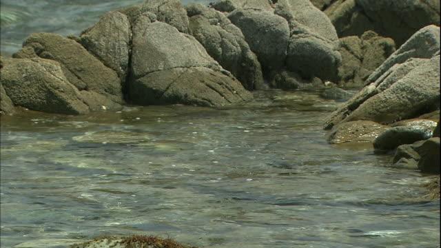 clean water flows into a tide pool on the rocky coast of hiraiso, japan. - gezeitentümpel stock-videos und b-roll-filmmaterial
