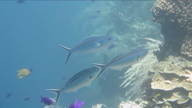 Produto de limpeza de peixes nada na boca de big fish
