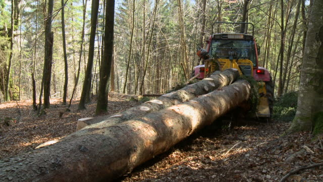 hd: cleaning away trees - timber stock videos and b-roll footage