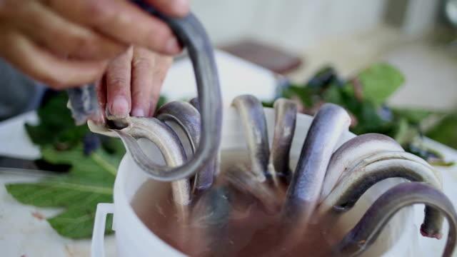 stockvideo's en b-roll-footage met reiniging van paling - paling