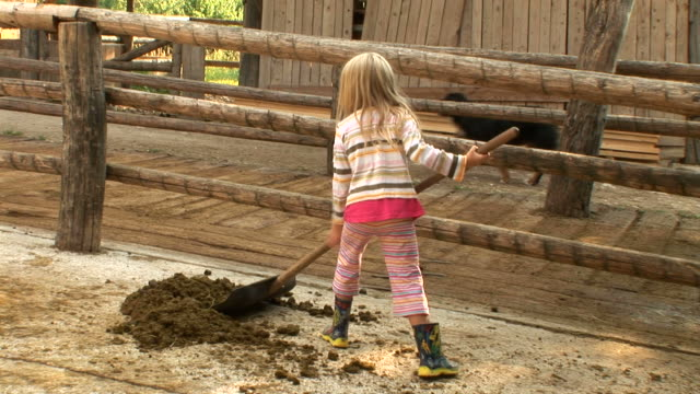 hd: cleaning horse manure - chores stock videos & royalty-free footage