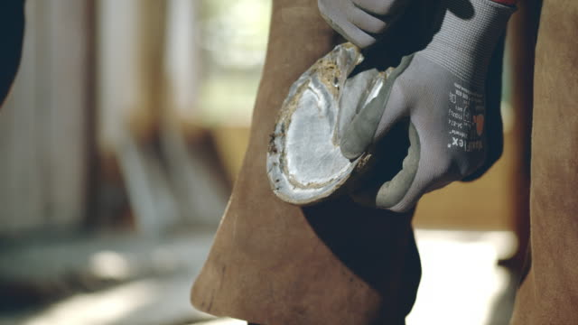 slo mo cleaning horse's hoof for new shoeing - horseshoe stock videos and b-roll footage