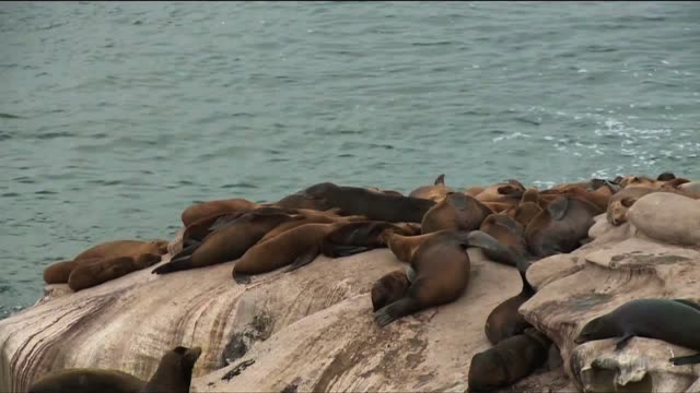 cleaning la jolla cove on may 27 2013 in san diego california - aquatic mammal stock videos & royalty-free footage