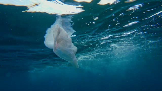 海の清掃。海の表面の下でビニール袋を引く男 - プラスチック点の映像素材/bロール