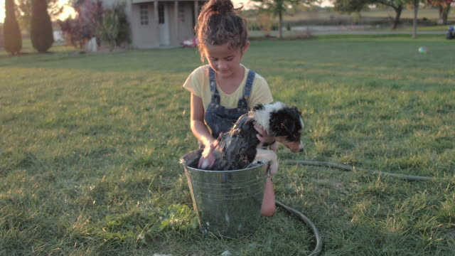 cleaning up after a day of fun - collie stock videos & royalty-free footage