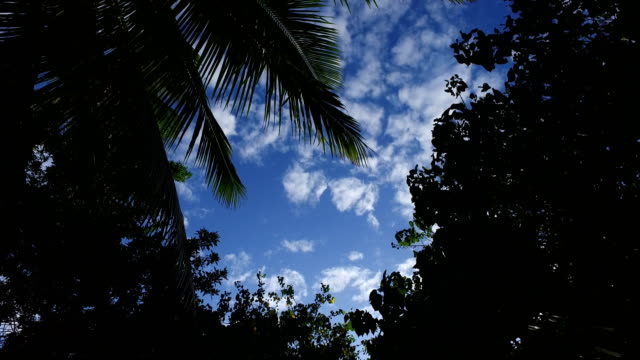 clear afternoon sky above pathway to beach on maui island - pacific islanders stock videos & royalty-free footage