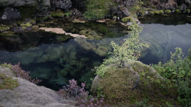 clear and still water of þingvellir rift valley, iceland - 淡水点の映像素材/bロール