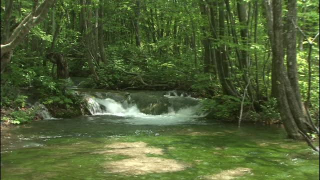 clear spring water flows through a forest in mount chokai, japan. - tree area stock videos & royalty-free footage
