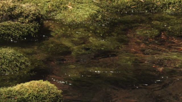 A clear stream flowing over mossy rocks