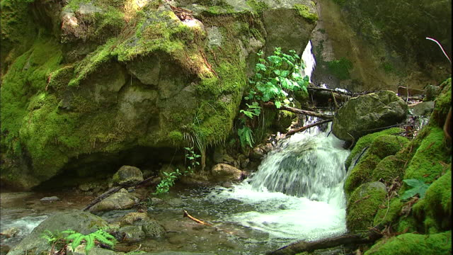 A clear stream flows over moss covered rocks in a forest.