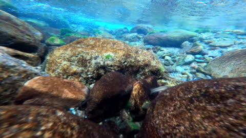 clear stream, people walking - freshwater stock videos & royalty-free footage