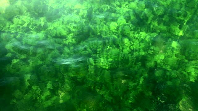 clear underwater - alga video stock e b–roll