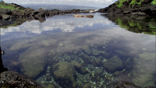 clear water and a cluster of rocks create a tide pool. - tide pool stock videos & royalty-free footage