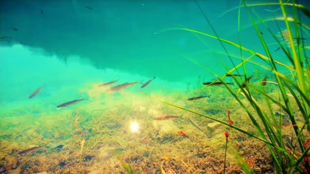 Klares Wasser und Fisch